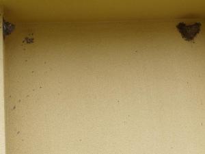 カラになったツバメの巣